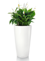 Office plants rent maintain uk quote - Tall office plants ...